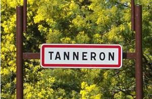 route du mimosa vers Tanneron
